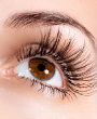 Services Eyelash Extension